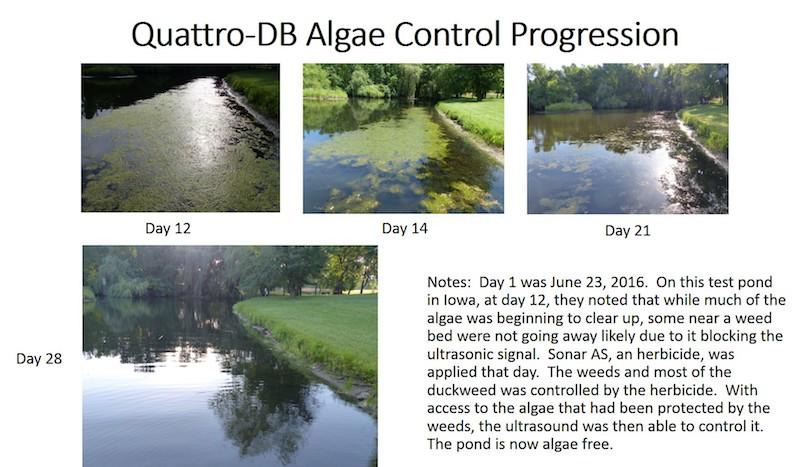 algae-control-progression.jpg