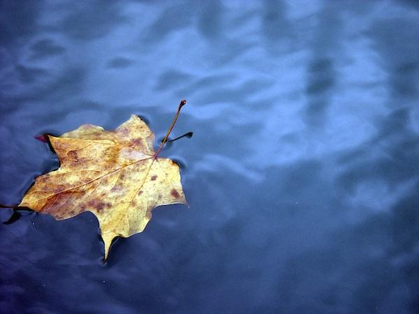 leafpond.jpg